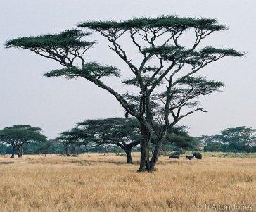 Africa (1 of 14)