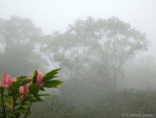 Costa Rica (1 of 5)