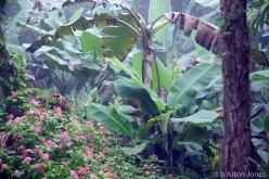 Costa Rica (2 of 5)