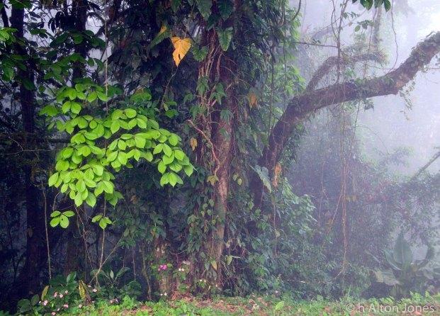 Costa Rica (3 of 5)